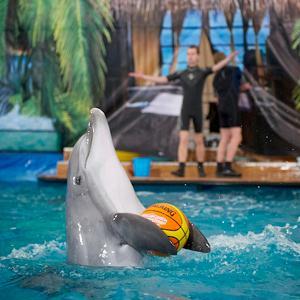Дельфинарии, океанариумы Парголово