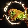 Цирки в Парголово