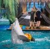 Дельфинарии, океанариумы в Парголово