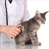 Ветеринарные клиники в Парголово